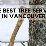 The 5 Best Tree Services in Vancouver